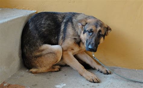 imagenes niños asustados perro aterrado por pirotecnia se lanza del und 233 cimo piso