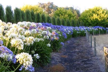 garden pics my garden pics