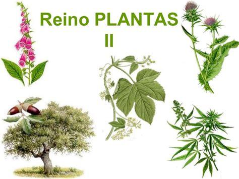 olguchiland las plantas ii plantas iijk