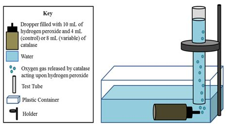 design an enzyme experiment enzyme ap biology lab notebook
