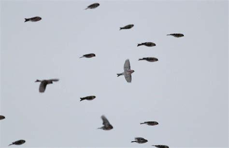 oggetti volanti non identificati gli inesistenti avvistamenti ufo di palermo roma e vasto