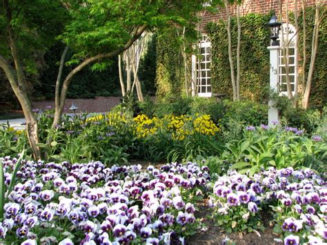 Gardening With Confidence 174 Pansies Jpg Pansy Garden Ideas