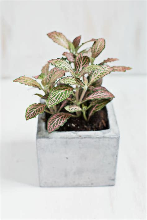 piante da fiore in vaso piante da fiore in vaso simple acquista pz pacco brand