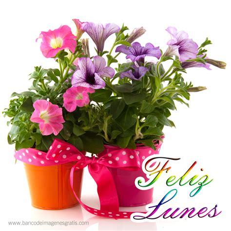 imagenes de flores naturales gratis banco de im 193 genes feliz lunes tulipanes con mensajes