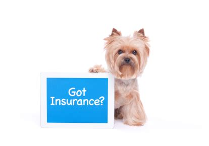 house insurance and dogs 10 high risk dog breeds insurance won t cover buying