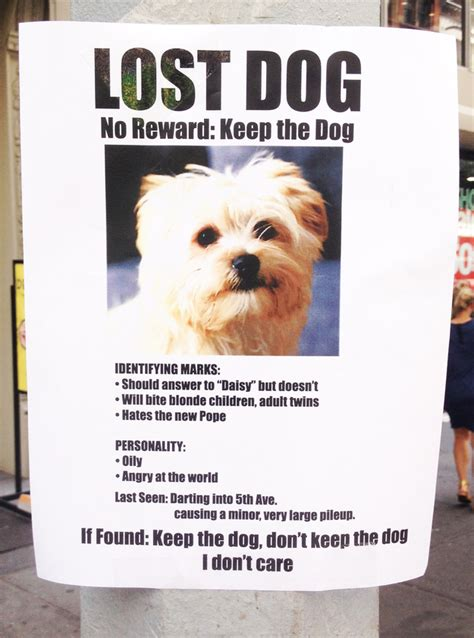 lost yorkie lost no reward keep the