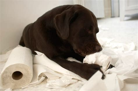 papers for dogs why does my eat paper cuteness