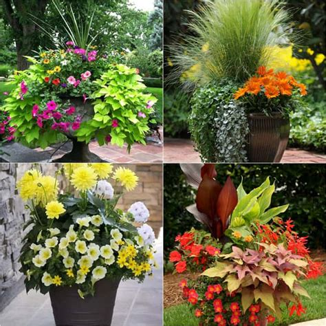 Container Garden Design Ideas 20 Favorite Flowering Vines For The Fence And Arbor