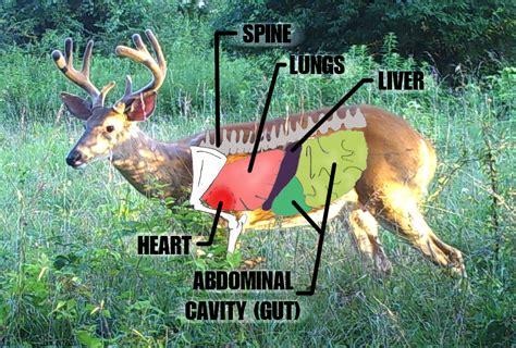 whitetail deer diagram deer anatomy diagram image for car engine scheme
