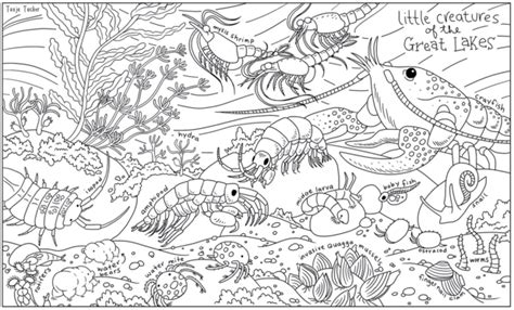 great sheets color chicago s smallest inhabitants on these cool coloring book pages lincoln park chicago