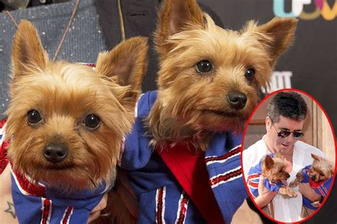 simon cowell dogs simon cowell i would clone my dogs and leona lewis is more exciting than a