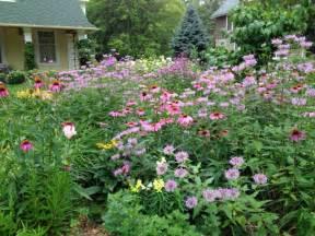 Backyard Buzzing 2 The Grackle Native Prairie Plants In Midwestern Gardens