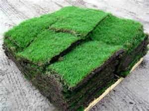 home depot sod grass prices