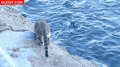 imagenes gif que son gif mira que bien pesca el gato gif 4233