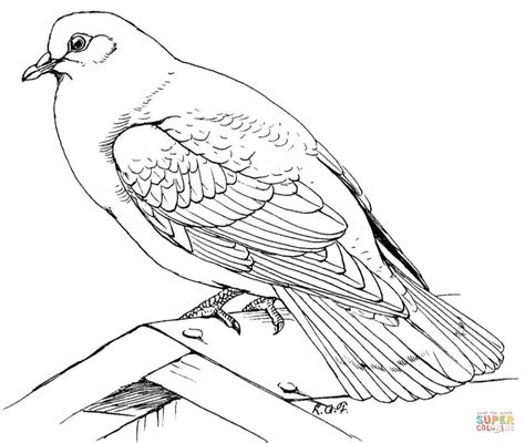 rock dove coloring page free printable coloring pages