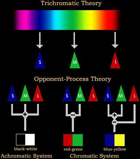 trichromatic theory of color vision debate resolution synthesis course neur 0193 great