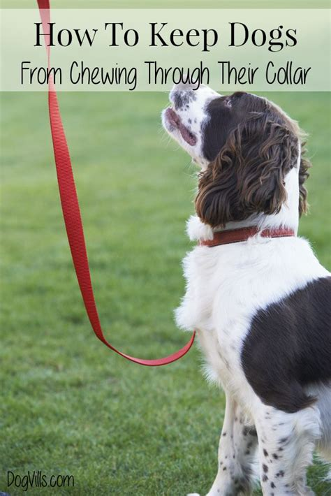 how to your not to chew things up behavior changes my keeps escaping the fence how to keep dogs from