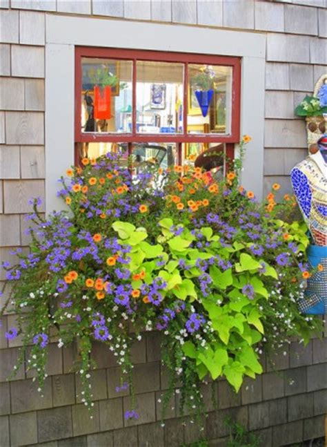 Box Garden Ideas Window Box Ideas Cool Garden Ideas