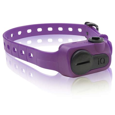 shock collar petco dogtra iq no bark collar in purple petco