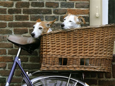 bike baskets for dogs terrierman s daily dose bicycle baskets for the dogs