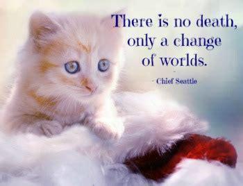 healing  heart     cat  blossoms