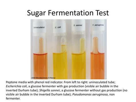 glucose test tube glucose test tube ppt biochemical characterization of