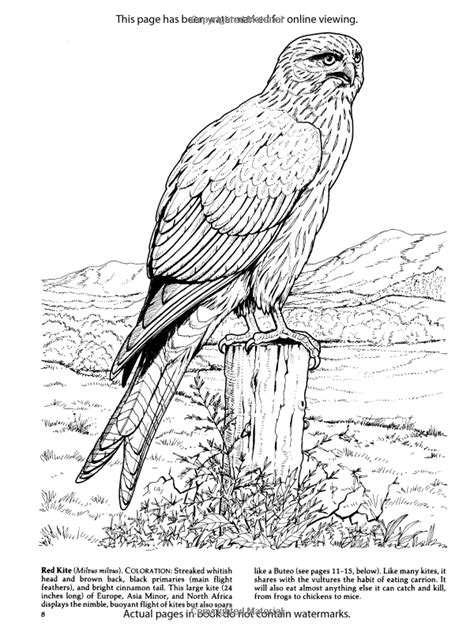 Birds Of Prey Coloring Book Dover Nature Coloring Book Birds Of Prey Coloring Pages