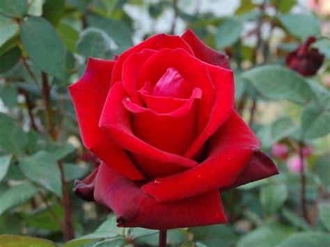 significato fiori di bach fiori significato significato fiori fiori cosa significano