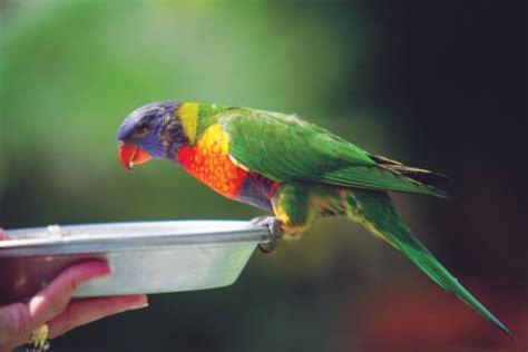 alimentazione pappagalli la dieta bilanciata per i pappagalli tutto ze