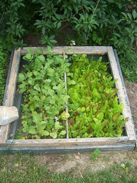 I Used An Old Window Frame To Make This Cold Frame In My Cold Weather Vegetable Gardening