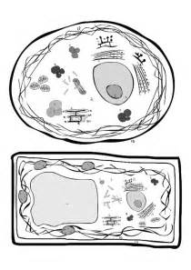 plant cell coloring sheet plant and animal cell coloring pages coloring