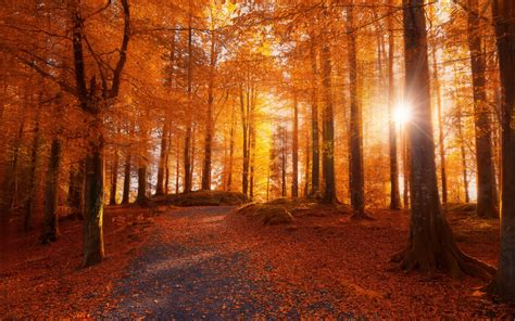 morning forest sunlight path trees fall leaves