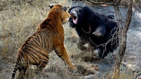 5 Animales Que Deberias Ver by Las 20 Peleas De Animales Salvajes M 225 S Brutales Que Ver 225 S
