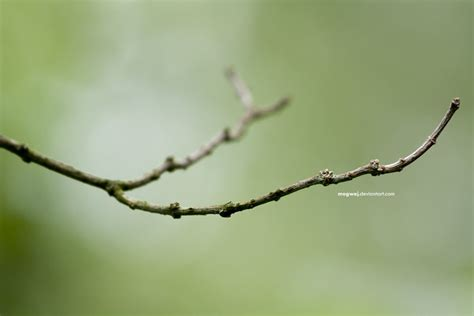 twig l a twig by mogwaj on deviantart