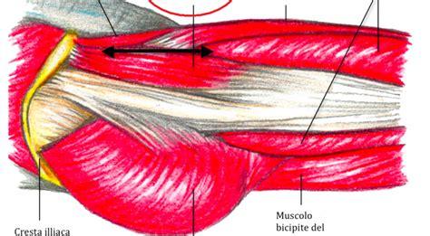 muscolo otturatore interno anatomia muscoli dell anca seconda parte gruppo