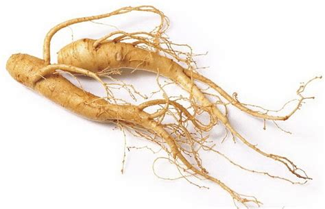 Panax Ginseng panax ginseng and testosterone does it work anabolic