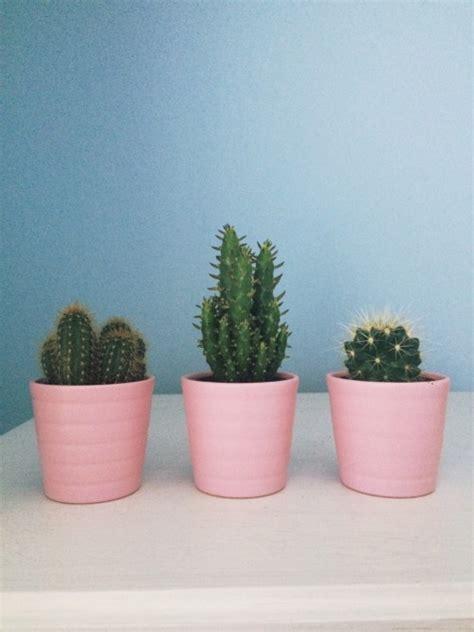 cute plants cute cactus pots and plants tumblr