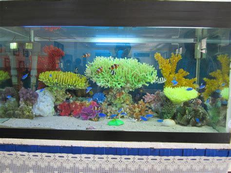 Makanan Ikan Hias Nemo cara memelihara ikan hias di akuarium belajar berkebun