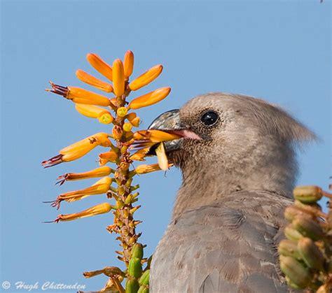 flower power grey go away bird s flower eating habits