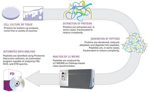 proteomics workflow proteomics and protein mass spectrometry thermo fisher