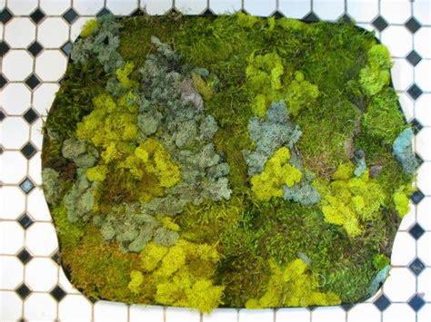 moss mat bathroom bath mats of moss and stones moss lichen algae