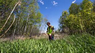 Wetland Delineation Forestry Explained » Home Design 2017