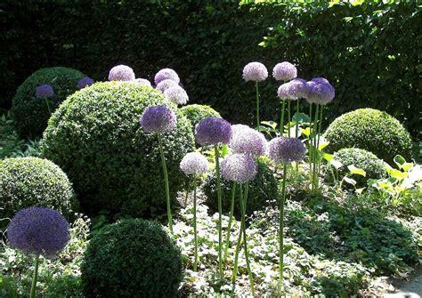 buchsbaum formschnitt kugeln und figuren schneiden topiary