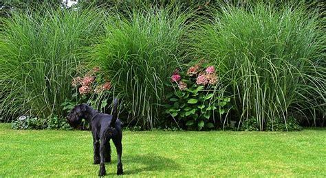 graeser und hortensien pinnwand hortensien gartenbeet