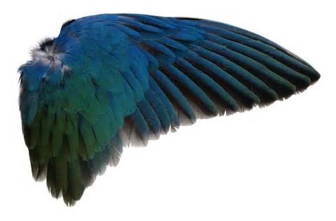 wing png by absurdwordpreferred on deviantart