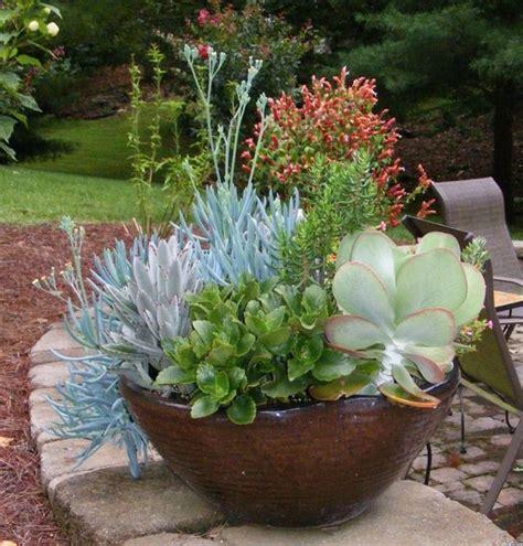 succulent container garden ideas im 225 genes que justifican nuestro por las suculentas