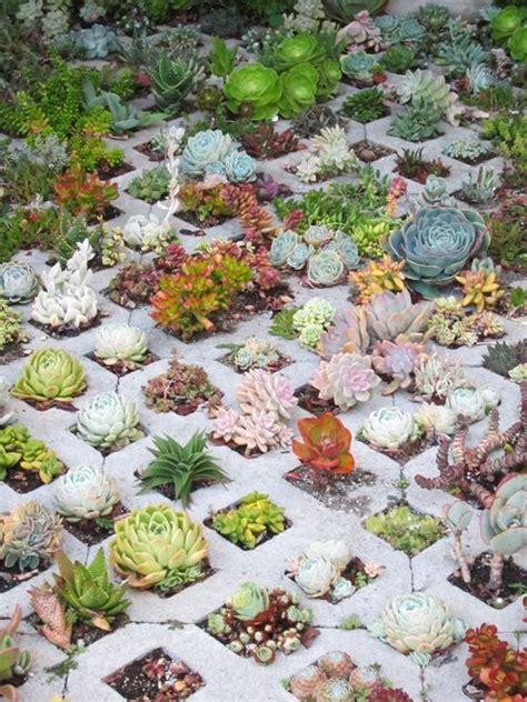 cactus da interno cactus wood garden piante da interno