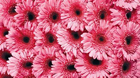 glitter wallpapers of flowers pink flowers wallpaper