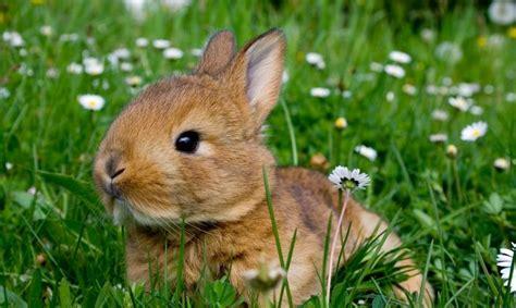 Tas Rabbit Flower tener un conejo como mascota hogarmania