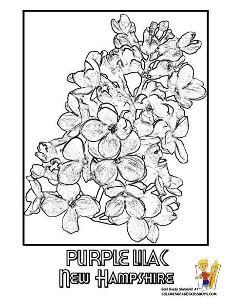 purple violet flower coloring page state flower printouts nebraska oregon flower coloring